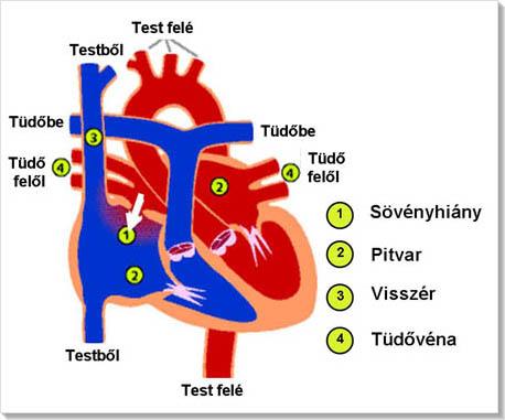 asd magas vérnyomás kezelése