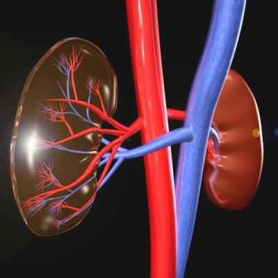 a veseartériák denervációja a magas vérnyomás kezelésében)