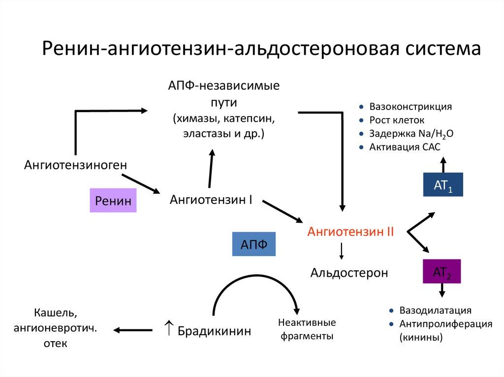 Hipertónia az utolsó generációs gyógyszerek