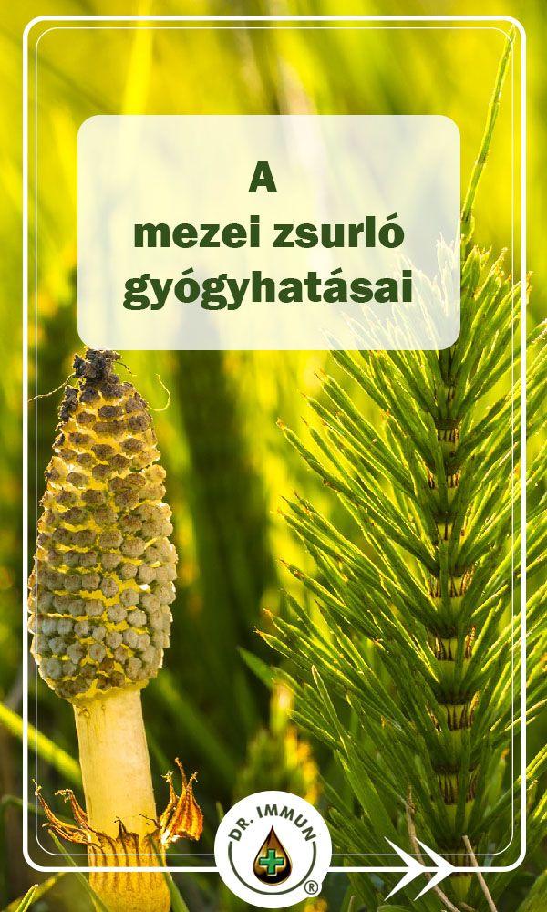A mezei zsurló egy sokoldalú olcsó gyógynövény - Egészségtér