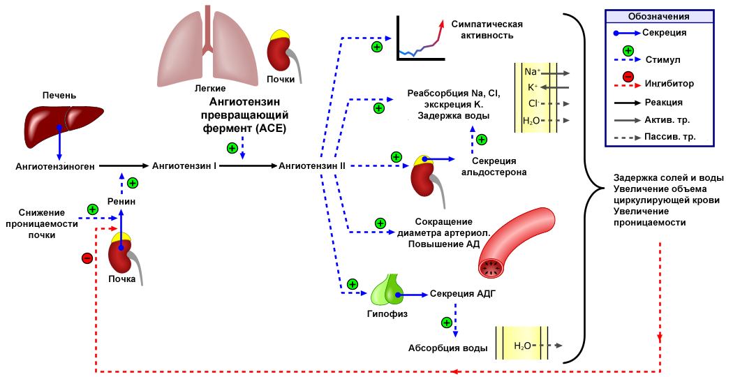 mellékhatások a magas vérnyomás kezelésében magas vérnyomás elleni gyógyszerek és vélemények