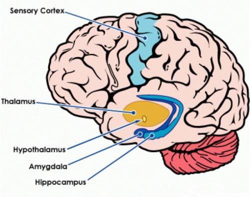 Neuraszténia - okok, formák, tünetek és kezelés - Kezelés