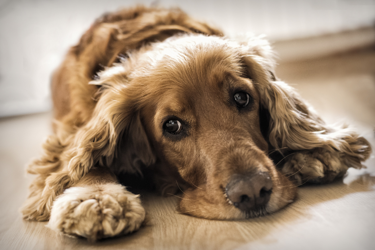 magas vérnyomás kutyák kezelésében pihenési rend magas vérnyomás esetén