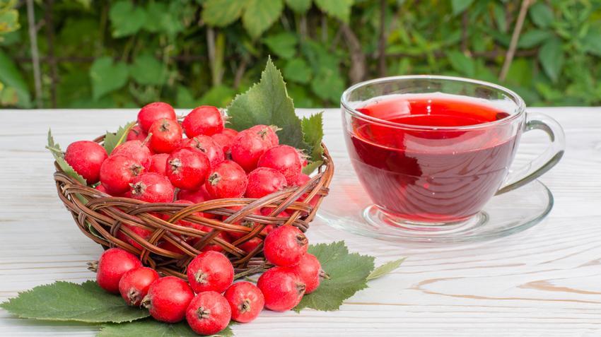 gyógynövények a magas vérnyomás kezelésében)