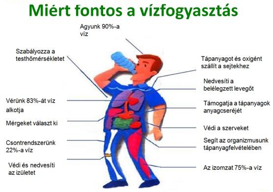 magas vérnyomás esetén mennyi vizet kell inni naponta szívritmus hipertónia