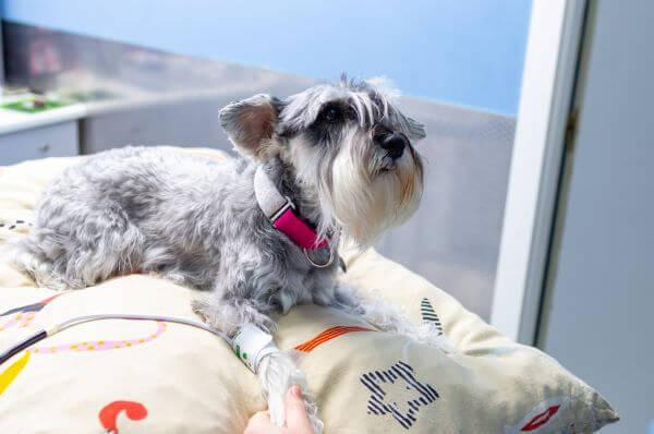 magas vérnyomás kutyák kezelésében diabetes mellitus magas vérnyomás kezeléssel