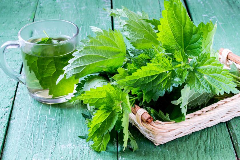gyógynövények magas vérnyomás kezelésére