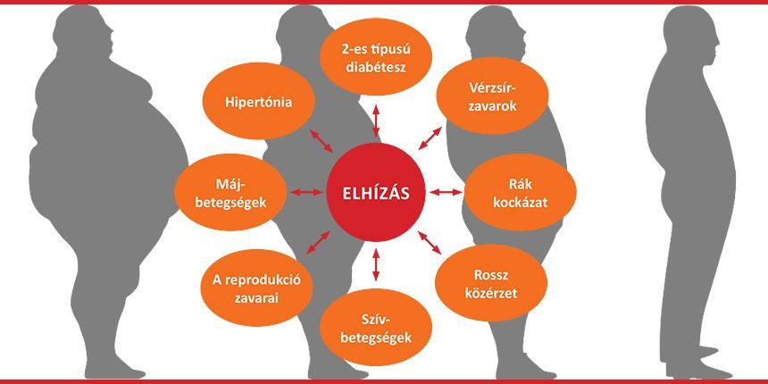 terápiás étrend elhízás és magas vérnyomás esetén)