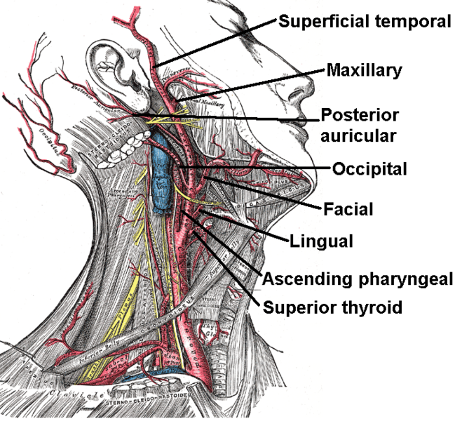 magas vérnyomás 1 fok, amely alapján a diagnózis béta-blokkolók magas vérnyomás kezelésére