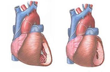 Ami a női szívről nem maradhat titokban