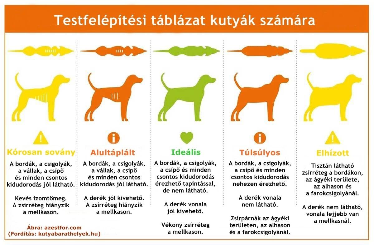a magas vérnyomás elleni kutyafa