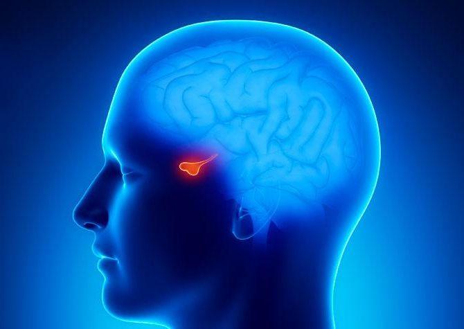 magas vérnyomás és az agyalapi mirigy
