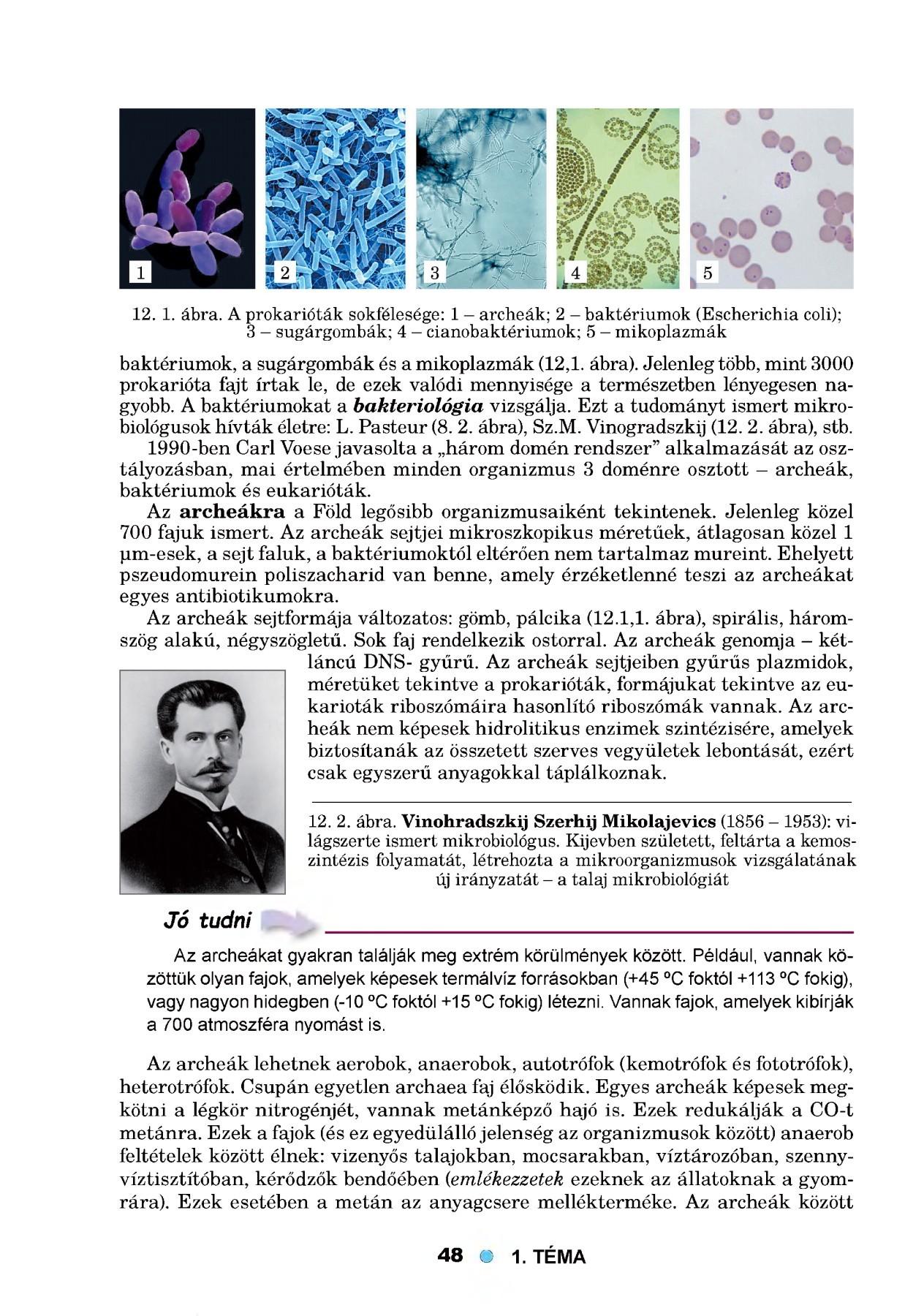 COVID–19 – Wikipédia