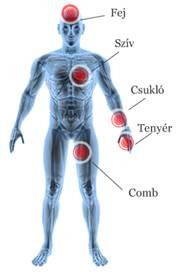 magas vérnyomás kezelése tenyérrel amoszov a magas vérnyomásról