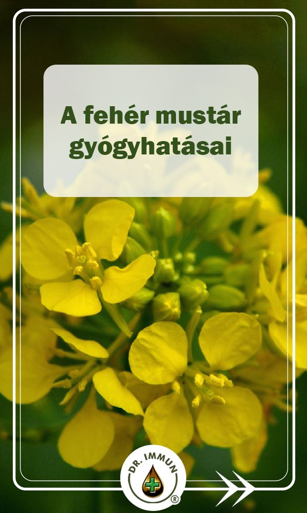 magas vérnyomás és mustár